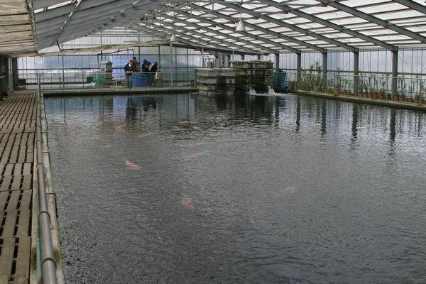 Общий вид большого 1500 тонного пруда